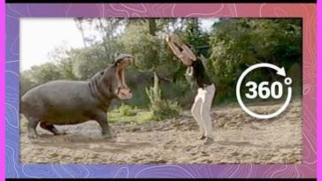 Almost killed by a Hippo!!